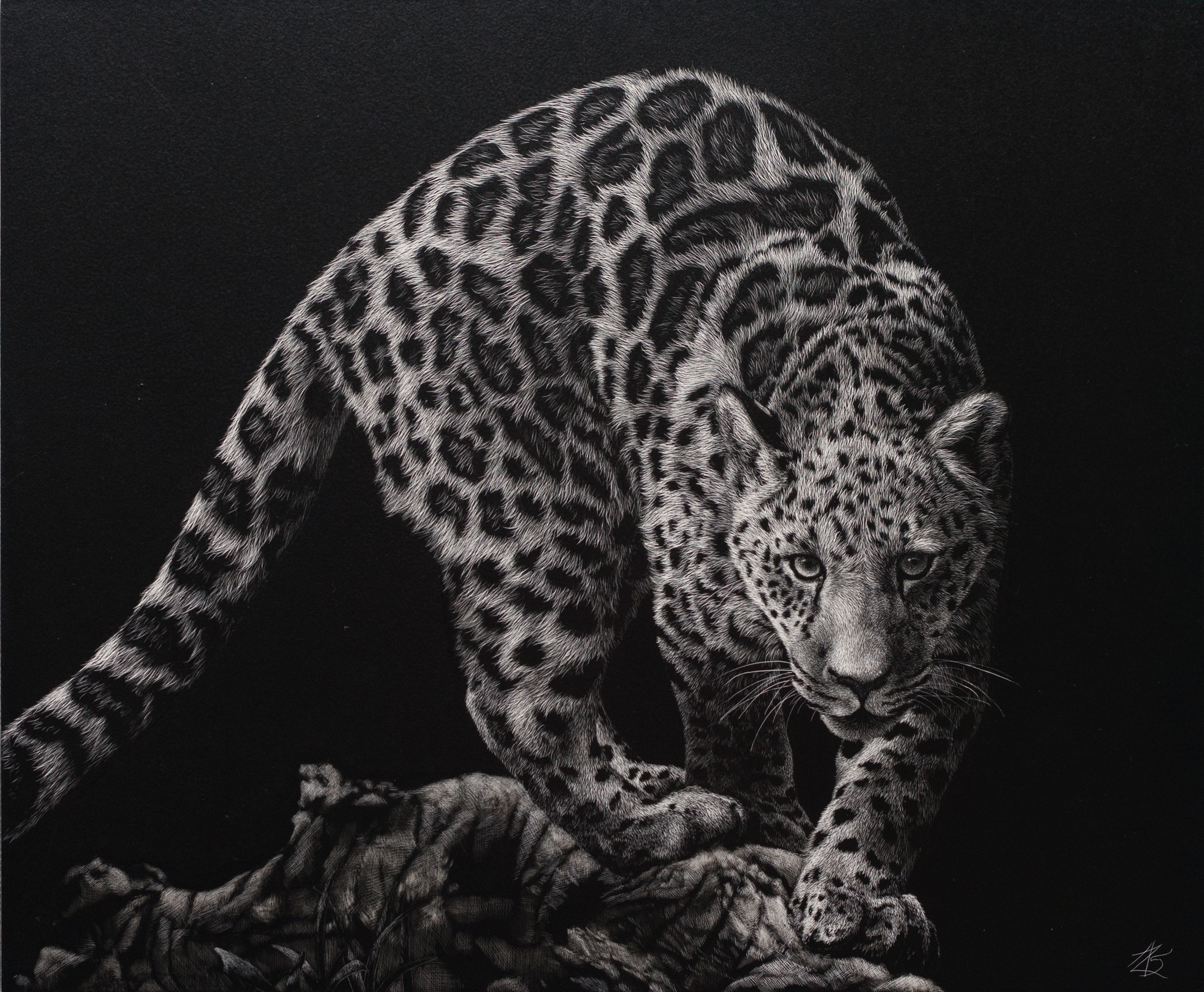 Scratchboard Amy Stauffer