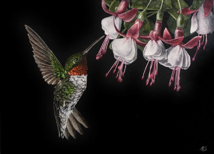 14-3 Hummingbird and Fushia